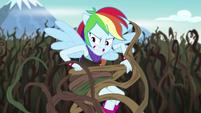 Rainbow Dash wrestling with bramble vines EG4