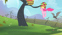 Pinkie Pie attracting the bats S4E07