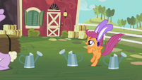 Scootaloo jumps like a bunny S2E12