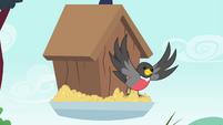 Mr. Robin exits the birdhouse S4E23