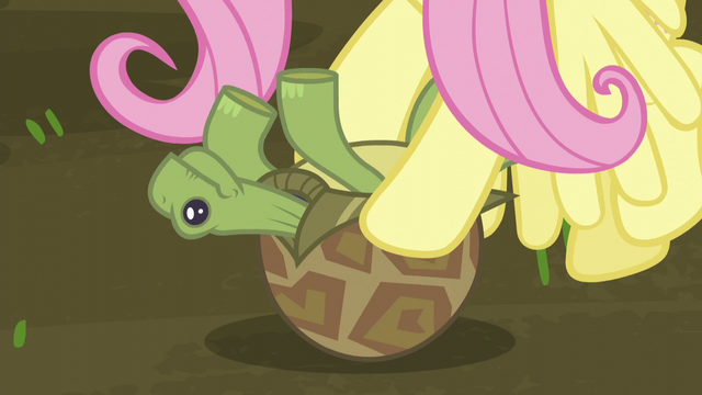 File:Fluttershy saves the turtle S5E23.png