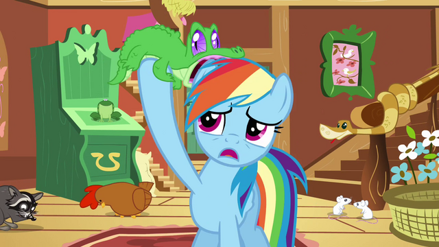 File:Gummy on Rainbow Dash's mane S03E13.png
