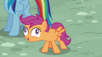 Scootaloo in derp-eyed excitement S6E7