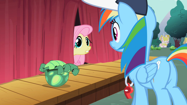 File:Fluttershy curtain tortoise S2E07.png