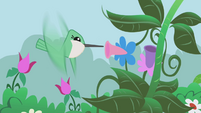 Hummingbirds that can really hum S1E03