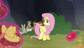 Animals encouraging Fluttershy S5E23.png