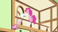 Pinkie Pie 'singing in front of everypony!' S4E14
