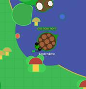 TurtleEatingMushroomBush