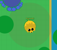 Lionroarbig