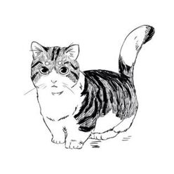 Codex Chairman Meow