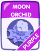 Purple Moon Orchid