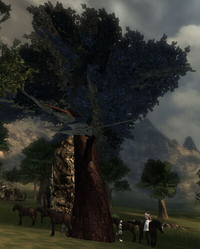 Ironwood Tree