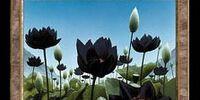 Lotus Vale