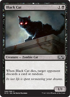 File:Black cat.jpg
