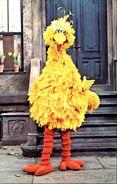 BigBird1972-1976