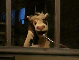 Cow announcer