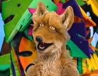 Animal Show coyote