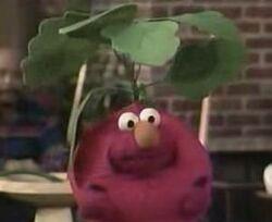 Elmo-radish