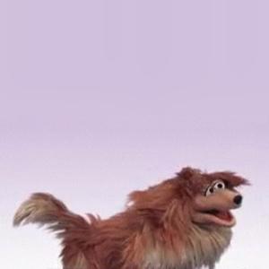 File:Collie dog.jpg