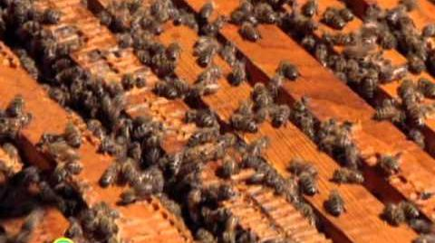 Sesame Street Honeybee Hullaballoo