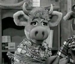 Dorothy bovine