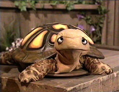Seymour (turtle)