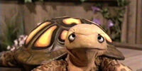 Seymour (turtle)