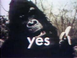 Gorilla-yes