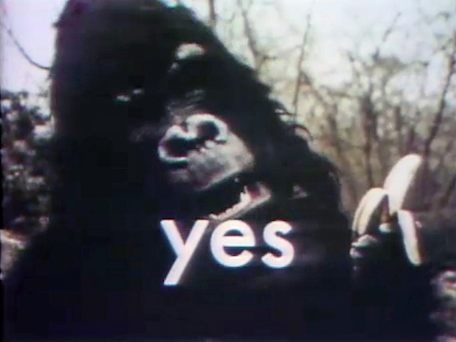 File:Gorilla-yes.jpg