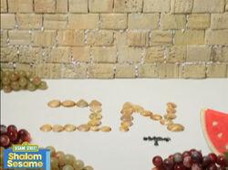 Shalom12-Month