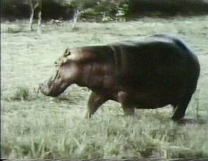 Film.hippo