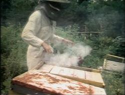Film.bees