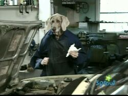Dogmechanic