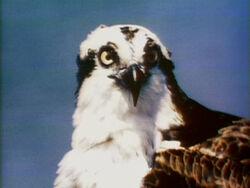 1576-Bird
