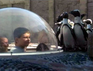 File:Ewpenguins-film.jpg
