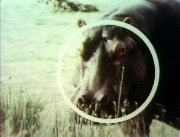 File:Song.hippopotamusround.jpg