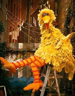 BigBird1970