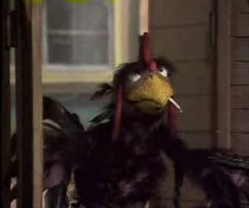 BlackRooster