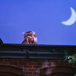 Hoots moon