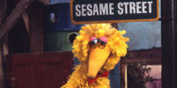 Big Bird's Alternate Identities
