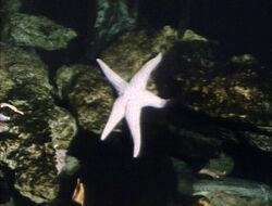 Starfishrefilmed