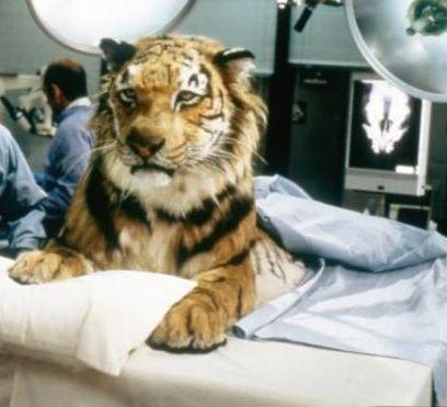 File:Jake-tiger.jpg