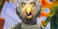 Hillary the Owl