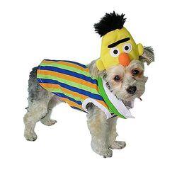 NewYorkDog.Bert