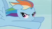 Rainbow Dash Stare 1 S2E7
