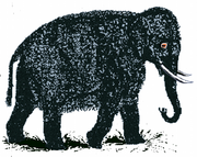Wollelephant.png