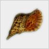 Hidden-shell