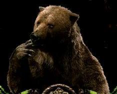File:Bulgy Bear.JPG