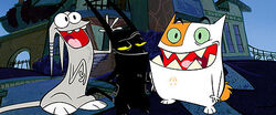 Catscratch Promotion