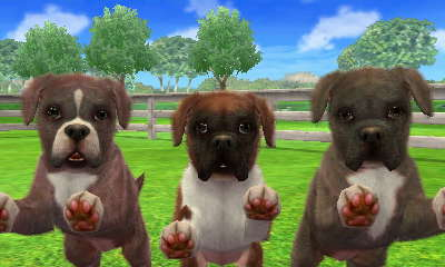 Boxer Nintendogs Wiki Fandom Powered By Wikia